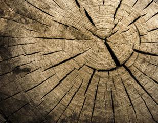 Struktura drewna. Tło