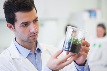 Young male researcher looking at young plant at lab