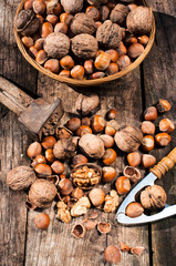 Hazelnuts and walnuts