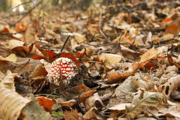 Leaves and mushroom