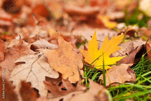 Yellow autumn leaf