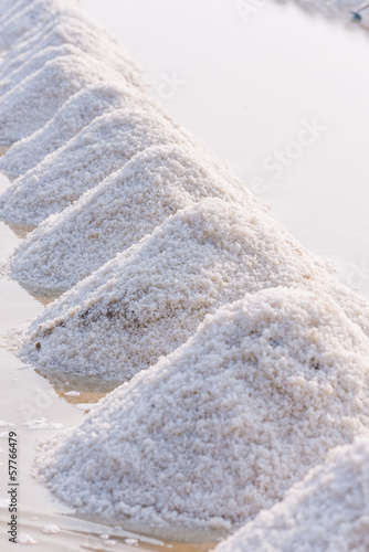 Row of sea salt in the farm