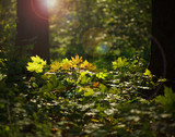 Sunlight in forest undergrowth