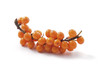 Sea-buckthorn isolated