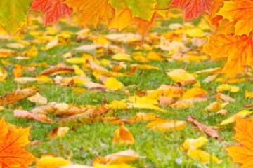 Herbstwiese und Herbstblätter