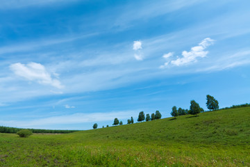beautiful grassland landscape in summer