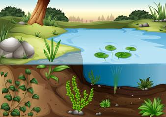 A pond ecosytem
