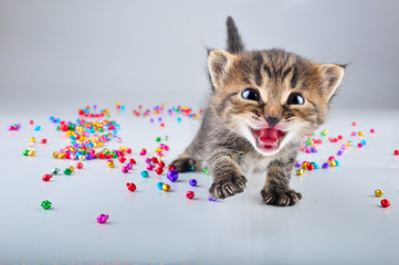 little kitten with small metal jingle bells beads