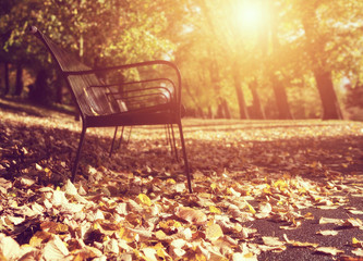 park bench soft focus
