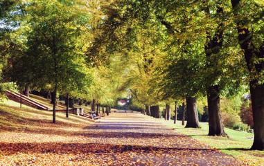 park path autumn