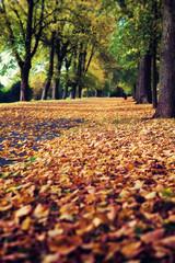 fallen leaves park