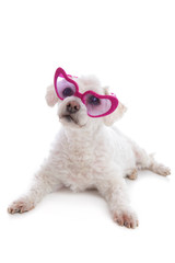 Love Sick Puppy looking through rose coloured glasses