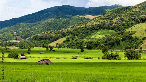 The rice field at Chiang Mai , Thailand