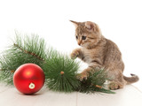 Kitten with a new year ball