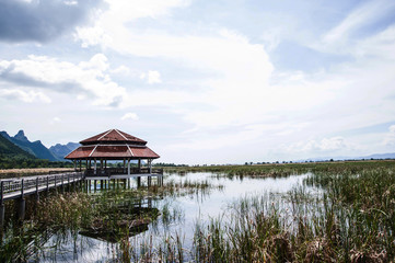 pavilion and wood bridge in swamp