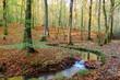 Serpent d'eau en forêt