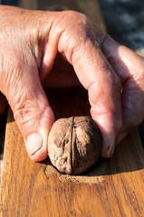 Walnut in hand