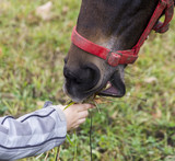 Child's hand gives grass to hors's snout