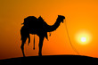 Silhouette camel at sunset on the dunes. Jaisalmer, India.
