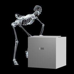 X Ray Skeleton01
