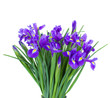 bouquet of blue irise flowers