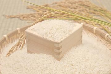 白米と稲穂