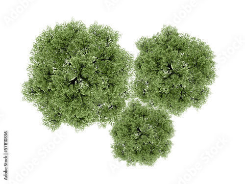 Trees rendered isolated on white
