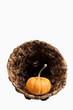 Cornucopia & Pumpkin