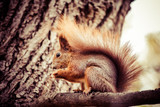 Squirrel, Autumn, acorn and dry leaves