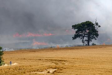 Ripe crop of wheat on fire