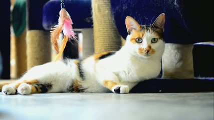 Three-colored cat in the animal shelter waiting for adoption