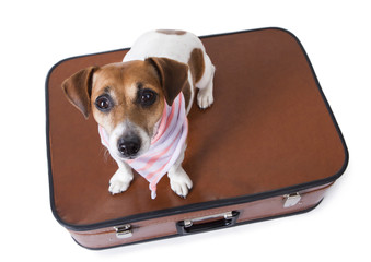 Small dog sits on closed suitcase