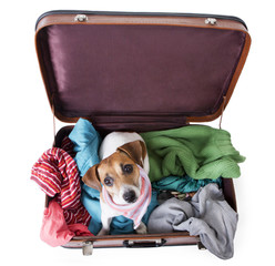 Cute dog sits in a suitcase