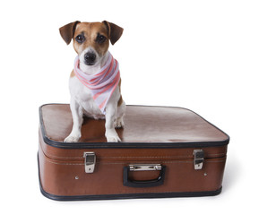 dog sits in a closed suitcase for globetrotting
