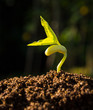 Green sprout growing from seed