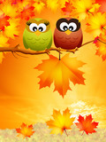 Owls in autumn