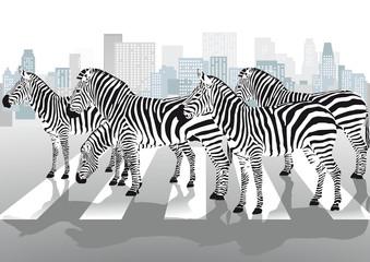 Zebras auf Fußgängerübergang