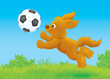 Funny brown puppy playing a football