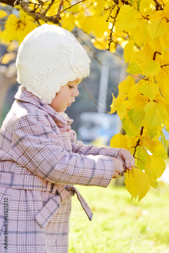 toddler girl near fall tree