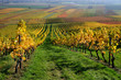 Autumn vineyard landscape in Rhine Valley, Germany