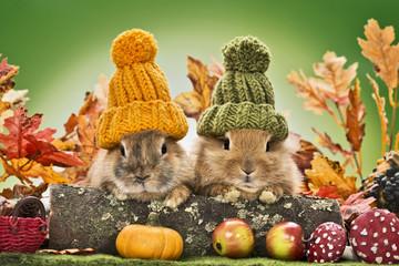 Kaninchen in Herbstlandschaft