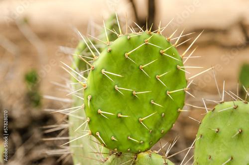 Closeup Cactus