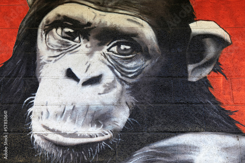 chimpanzé graffiti 0527f © txakel
