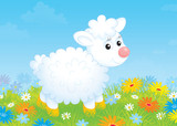 Little white sheep walking on a flowery meadow