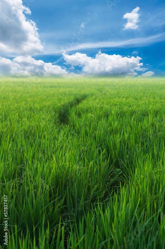 Fototapeten,landschaft,himmel,thailand,agricultural