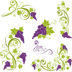 Grapevine. Vector wine design elements