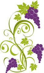 Grapevine. Vector wine design elements