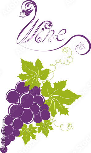 Grapevine. Wine design elements