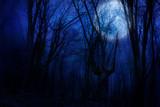 Fototapety dark night forest agaist full moon