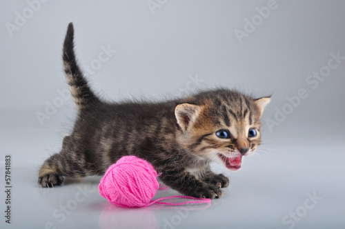 funny little kitten playing with a woolball